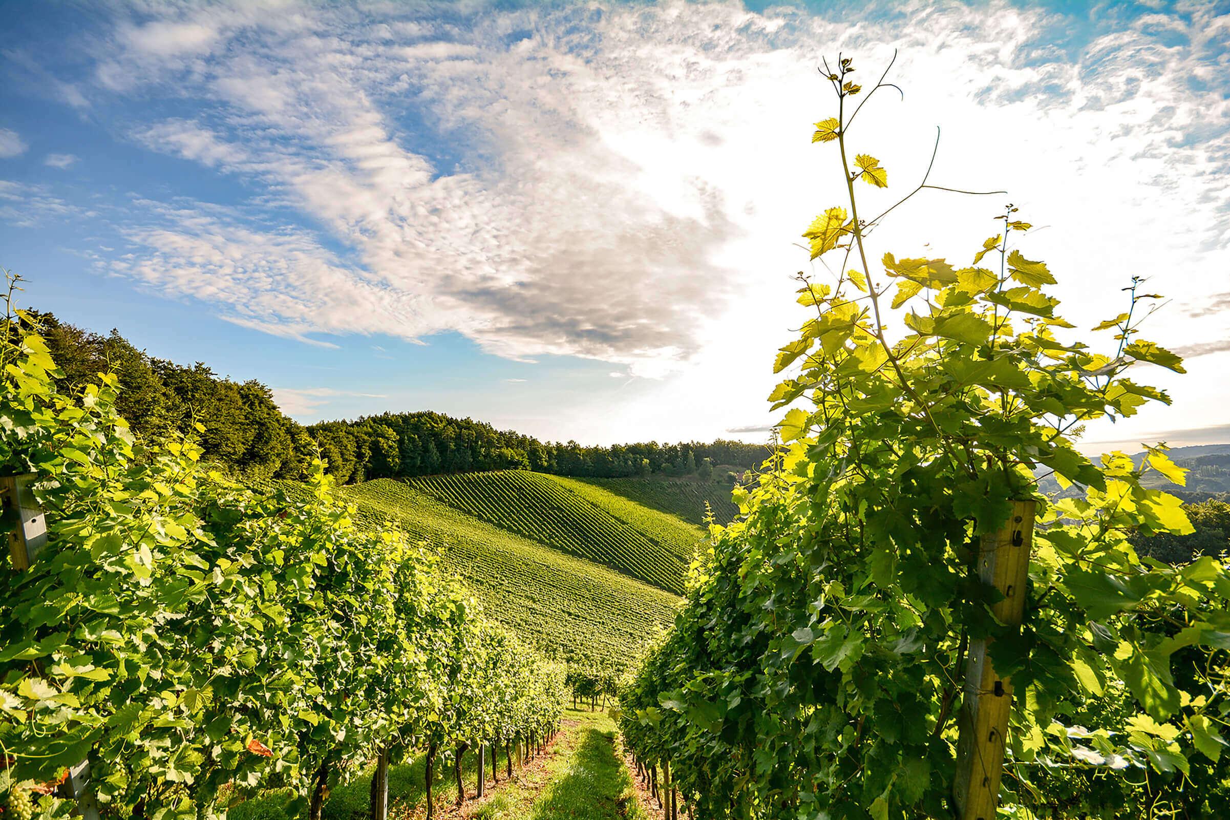 Weingut Gradisnik … jeder Schluck ein Genuss